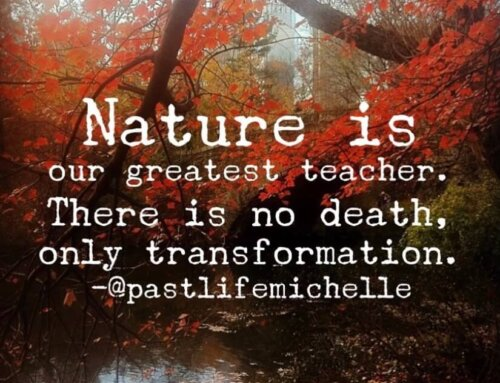 Nature is Our Greatest Teacher